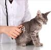 Ветеринарные клиники в Йошкар-Оле